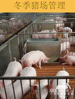 冬季:猪场管理要注意哪些问题?