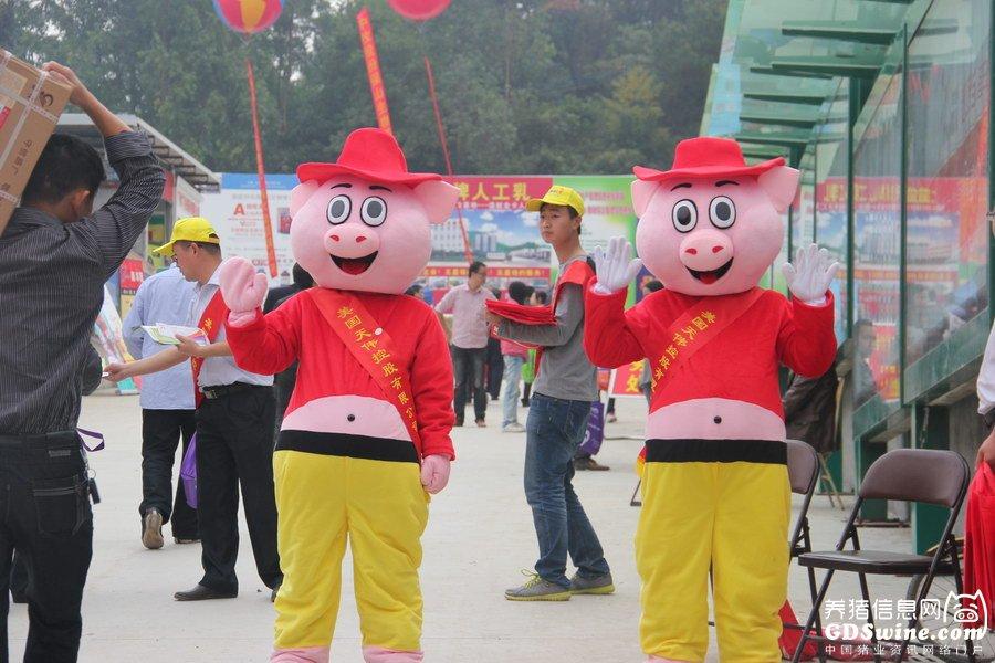 """博览会上的""""明星猪"""""""
