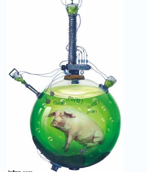 科学饲养猪的第N种方法