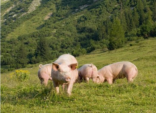 用制度确保畜禽养殖业健康发展