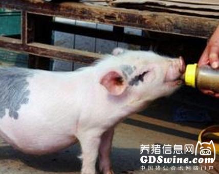 神奇!这些导致仔猪死亡的猪病用一招就能搞定