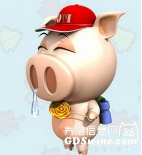 治疗猪鼻炎的简单实惠方法居然是这个……