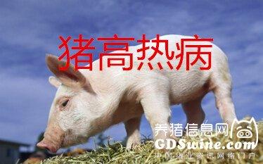 【超详细干货】猪高热病预防诊断治疗方案
