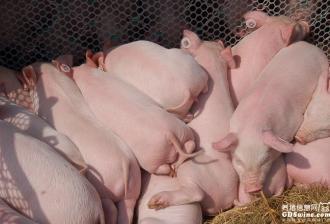 他山之石|丹育连云港猪场管理模式(北欧农场)