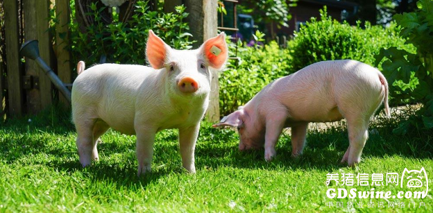 <b>如何提高哺乳仔猪的成活率</b>