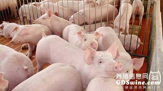 <b>农业部要求这些场2020年底前要达到蓝耳、猪瘟净化标准</b>