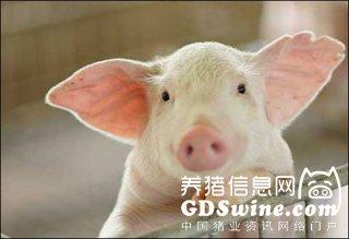 广东省猪群伪狂犬阳性率处于全国较低水平