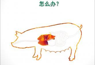 猪生性怕热!
