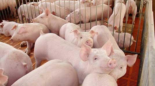 23家!广东省公布通过省级动物疫病净化验收的种畜禽场名单