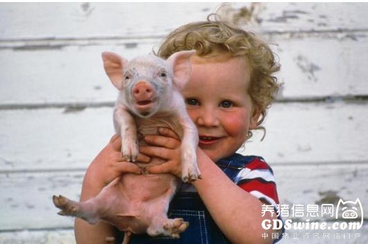 <b>天朝VS美帝,猪业发展差在哪里?</b>