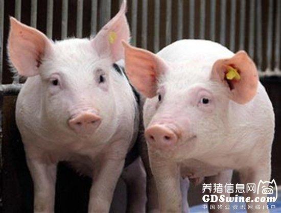 关于受理2018年春季种猪生产性能检测的通知