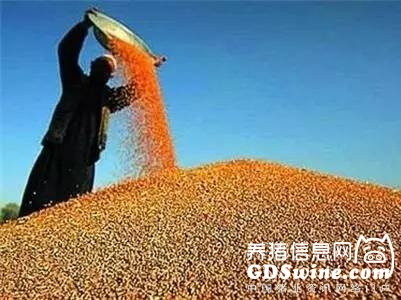 <b>2018年玉米市场价格展望</b>