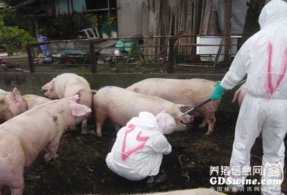 农业部批准猪用口蹄疫O型、A型二价灭活疫苗为新兽药