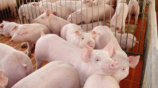 广东省发布畜禽养殖废弃物资源化利用工作方案