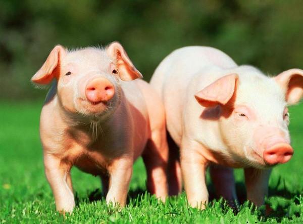 国家统计局:2017年全国生猪出栏68861万头,增长0.5%