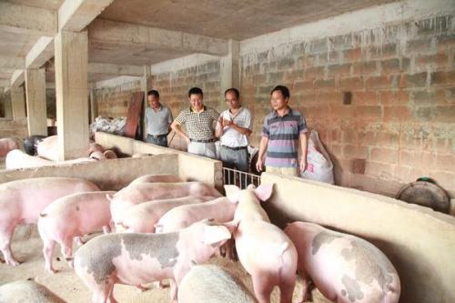 企业带动养殖业 扶贫走出新路子