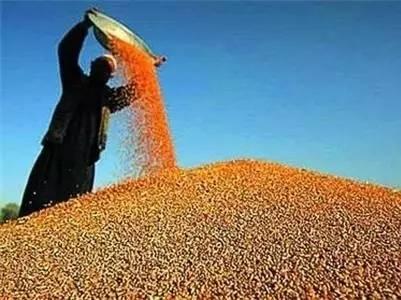 春节后,原料出现暴涨,饲料价格也为之涨价