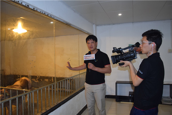 养猪信息网专访肇庆美加宝练智文总经理