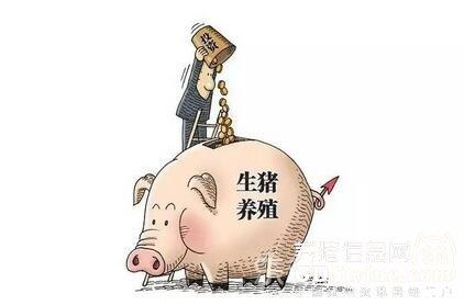 寒心!地方官员虚报猪只骗补贴,难怪养殖户领不到【正业特约―每周热文】