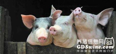 养猪模式大PK!猪价下跌,三巨头的利润为何有增有减?