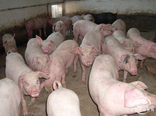 """""""猪周期""""呼唤政府更多理性的关怀"""