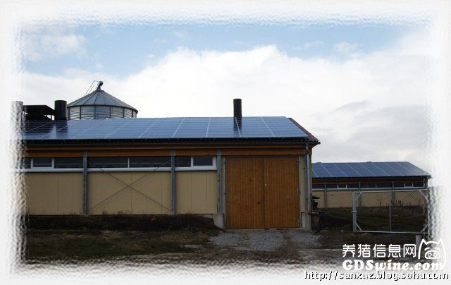 下图说明:房顶上布满太阳能光板。猪倌说,养猪场耗电量不大。