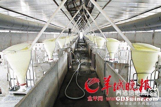东莞政府禁止再养猪谁为猪农规划以后的日子?