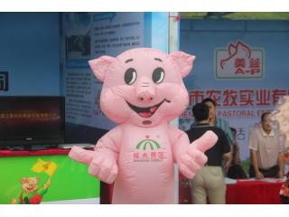 【现场花絮】直立行走的猪猪,各种萌