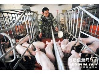 <b>八个措施教你降低猪热应激</b>