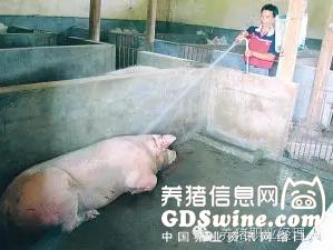 """<b>想让猪场疫病少,就要做到――控""""三流""""把""""三口""""!</b>"""