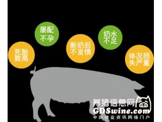新品上市| 普瑞纳® 品牌隆重推出全新母猪整体解决方案-纽悦多