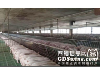 <b>刘青林:从产房管理到养户仔猪断奶后期饲养管理</b>