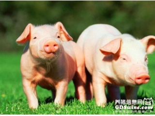 <b>季节转变,猪场谨防腹泻</b>