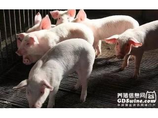 猪伪狂犬野毒2017年上半年检测报告