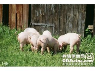 "<b>双节已近,猪价会给你一个""惊喜""?</b>"