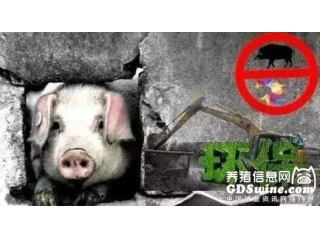<b>环保、大企业扩张、饲料涨价、进口肉,谁是引发猪价下跌的真凶?</b>