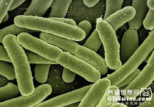 【解密】大肠杆菌与昆虫杆状病毒表达系统究竟孰优孰劣?