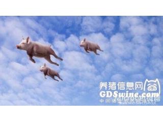 农业部:四季度猪价将进入季节性回升通道,春节前或上涨至每斤7.5-8元
