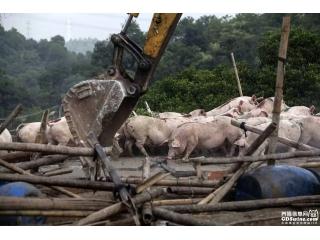 人民日报:拆了养猪场,生计咋保障?
