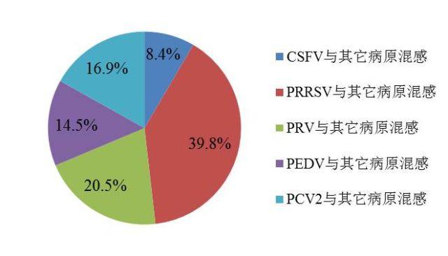 图2  猪病的混合感染情况统计