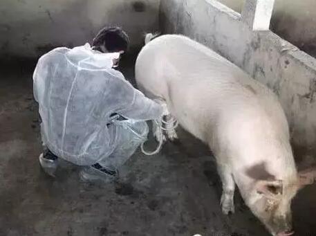 空怀母猪管理