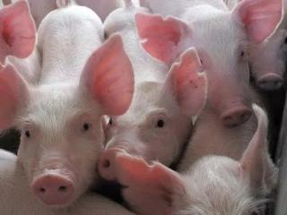 <b>探秘扬翔原料采购:3天奔走2000多公里,只为让猪吃得更好一点</b>
