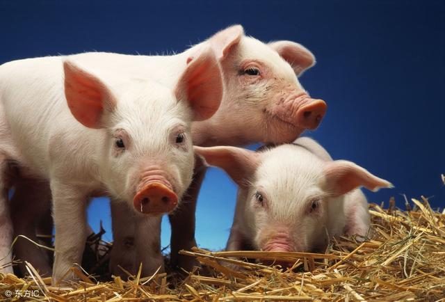 各个阶段猪群的养猪技术参数