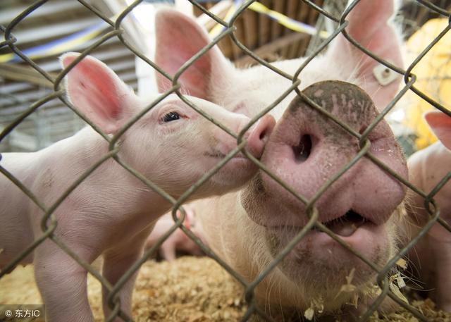 养猪技术:猪不同阶段拉稀腹泻的原因和防治措施(齐全)