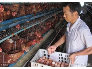 防治畜禽养殖污染,长春禁养区内规模养殖场全部关闭或搬迁