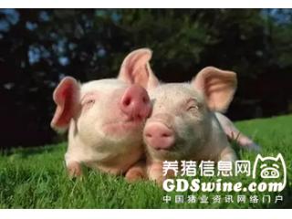 <b>母猪配种的黄金时间表(养猪人一定要收藏)</b>