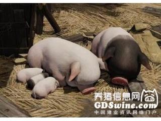 <b>秋冬季如何养好育肥猪?抓好保温是关键!</b>