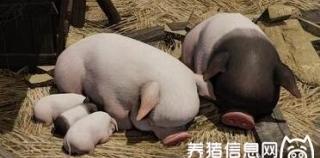 秋冬季如何养好育肥猪?抓好保温是关键!