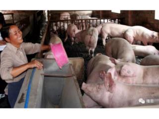 中国养猪人,你若快乐,我就微笑