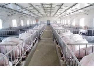 冬季怎么做好母猪管理,减少繁殖障碍?